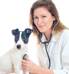 dreamstime_xs_29447857veterinarian